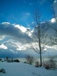 beachtree
