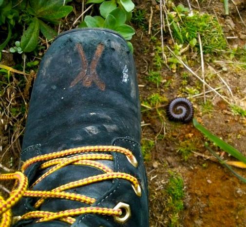 boots centipede