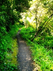 forest trail
