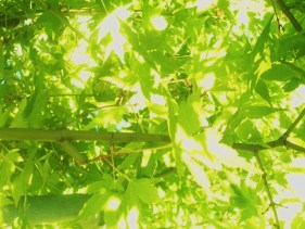 gardentree