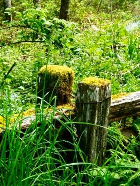 moss stumps