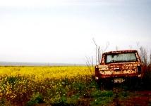 mustard truck