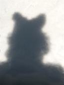 snow kitty shadow