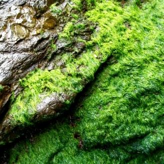 greenseaweed.jpg