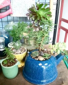 Kitchenware = succulent gardens