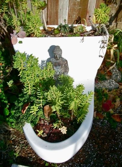 Toilet = succulent garden