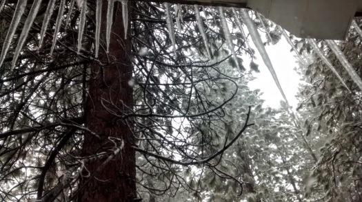 Icic;esand tree