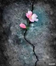 flower-crack